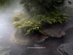 Jardin primitif